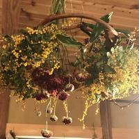 葡萄の蔓のグルグル輪っかで「フライングリースを作ってみました~」編 - ドライフラワーギャラリー⁂ふくことカフェ