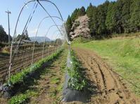 端境期の春野菜マルシェ - 南阿蘇 手づくり農園 菜の風