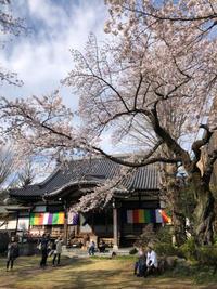 論太郎 放生会と墨田の夜桜 - やよいの空