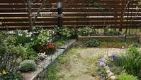 水仙タリア少しづつリセット庭への思い - miyorinの秘密のお庭