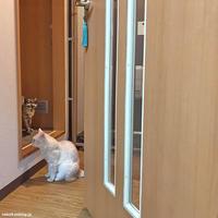 引っ越し後 初小競り合い - 賃貸ネコ暮らし|賃貸住宅でネコを室内飼いする工夫