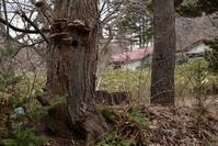 キツツキ科の巣穴 - こんなものを見た2