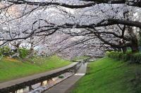 【江川せせらぎ緑道】 - うろ子とカメラ。