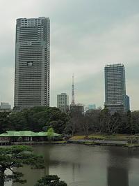 浜離宮公園の向こう東京タワー - 風の香に誘われて 風景のふぉと缶