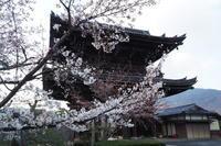 清凉寺 - Taro's Photo