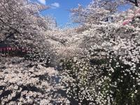 お花見 - kief  代官山