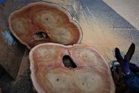 欅4枝輪切り製材 - SOLiD「無垢材セレクトカタログ」/ 材木店・製材所 新発田屋(シバタヤ)