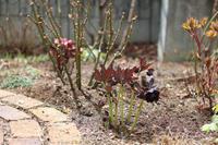 久しぶりにポチっと☆ - my small garden~sugar plum~