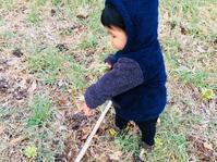 再び息子とフキノトウを採りへ - 山谷彷徨