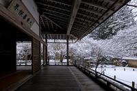 雪の京都常照皇寺の雪の華 - 花景色-K.W.C. PhotoBlog