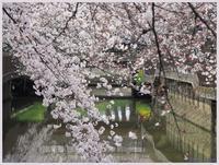 戸田市笹目辺りの桜-3019) - 趣味の写真 ~OLYMPUS E-M1MarkⅡ、PenF~