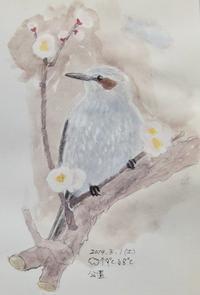 #野鳥スケッチ #ネイチャー・ジャーナル『鵯』 Hypsipetes amaurotis - スケッチ感察ノート (Nature journal)