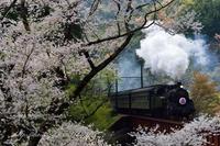 桜とSL - HIROのフォトアルバム