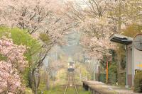 春の旅日和 - PTT+.
