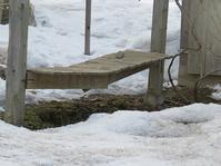 雪の重みに耐えかねて・・ - あいやばばライフ