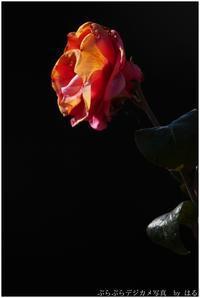 春はここに(4)生と死 - ぶらぶらデジカメ写真 by はる