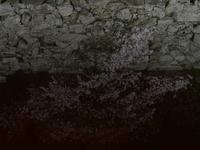 夜桜 - ブナの写真日記