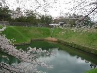 千鳥ヶ淵桜の昼と夜 - jujuの日々