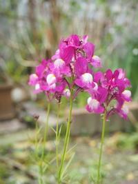 春に庭No.1 - グリママの花日記