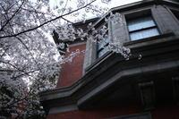 桜と洋館 - 一瞬をみつめて