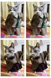 一番似合っているで賞 - ぎんネコ☆はうす