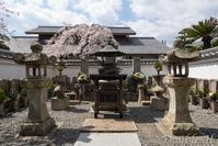 桜の下に眠る47士 - one day, one photo