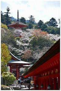 多宝塔からの桜見 -  one's  heart