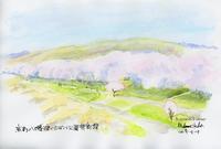 八幡背割提の桜並木 - 風と雲