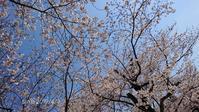 桜にモッコウバラにイチゴのお花 - たまの*雑記帳*