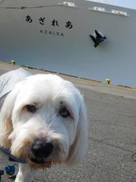老犬ゴン太の新日本海フェリー旅 - 老犬をフェリーに乗せて