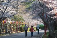 今朝の桜 - グル的日乗