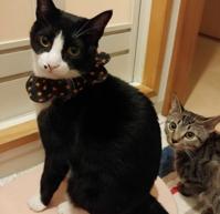 なんでやねん猫と我が家の猫 - 素人木工雑貨と犬猫日記