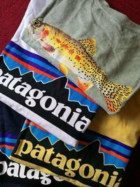 patagonia続々と到着中‼️ - DAKOTAのオーナー日記「ノリログ」