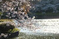 水辺の春 - 木洩れ日 青葉 photo散歩