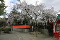 車折神社の桜 - ぴんぼけふぉとぶろぐ2