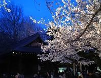 676、寒空の観桜薪能 - 五十嵐靖之 趣味の写真と短歌