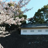 乾通りの桜抜け行ってきました🎵 - 毎日がばら色
