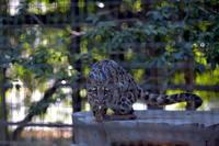 タヤ - 動物園へ行こう