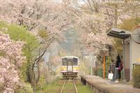 サクラの駅から - PTT+.