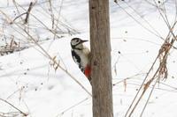 アカゲラさん~4月の訪問鳥 - My favorite ~Diary 3~