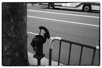 壬生-5 - Hare's Photolog