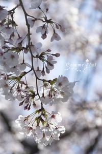 sakuraこれくしょん - Comme lui Style