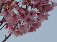 『フラワーパーク江南の花散歩』 - 自然風の自然風だより