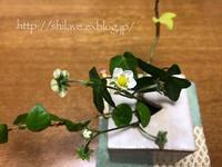 花盛り - 白雪ばぁばのかんづめ