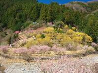 桜めぐり2019~五條川岸から性瀧寺~ - ばってらの放浪季
