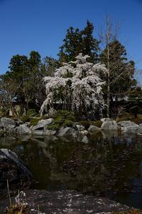 奈良に行ってきました - 我峰天晴