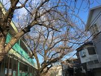 桜散歩と気持ちだけ華麗なるグレーチング飛び【動画】 - HAMAsumi-Life