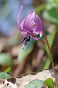 春待つ蝶 - 川の流れのカンツカブログ
