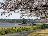 多々良沼の桜2019(その2)・・・桜並木と浮島弁財天を掛け算で - 『私のデジタル写真眼』