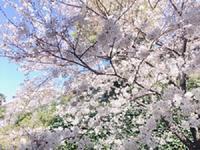 サクライロ - 表参道・銀座ネイルサロンtricia BLOG